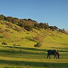 Rolling hills near stanford by shoenberg3
