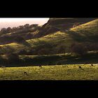 Oak-lined hills near stanford by shoenberg3