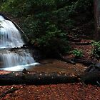 Berry creek - waterfall 2 by shoenberg3