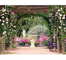 Scented Colonnade Photographic Print