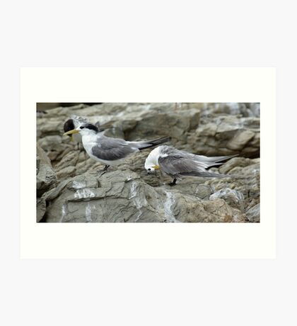 Crested terns Art Print