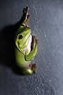 Frog by Cathie Tranent