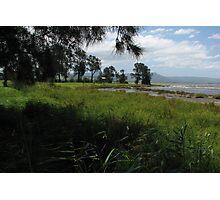 Swamp Oaks of Mogurah Point Photographic Print
