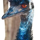 Emu at Melbourne Zoo by melissagavin