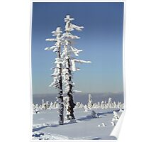 A diamond-dust day at the Smrk mountain 1 (Jizera mountains, Czech Republic) Poster