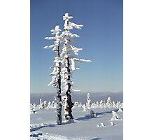 A diamond-dust day at the Smrk mountain 1 (Jizera mountains, Czech Republic) Photographic Print