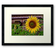 """""""Radiant"""" Framed Print"""