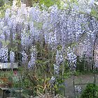 Glicyne in the French Garden by JF Gasser