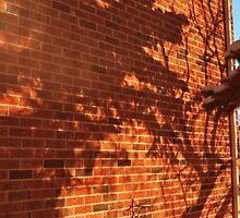 Winter light by BradleyO