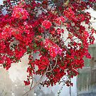 Bougainvillea Door by RightSideDown