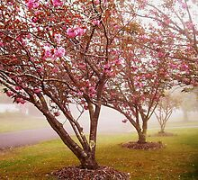 Misted Blossoms (Leura) by RightSideDown