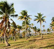 """COCONUT PALMS"" - Barra lake & sea by Sandy Beaton"