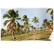 """COCONUT PALMS"" - Barra lake & sea Poster"