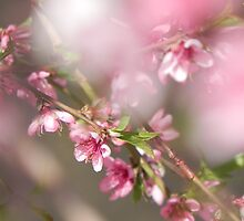 Spring Pinks by Darcy Grizzle