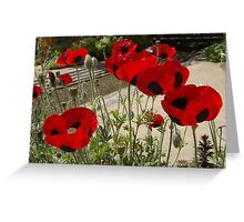 Blood Red- Getty Museum Garden, Calif                                                                                Greeting Card