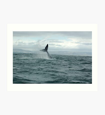 whale Tail- south africa Art Print