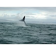 whale Tail- south africa Photographic Print