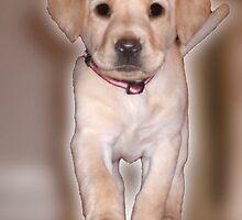 Our puppy Stella by Josef Pittner