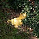Discarded Duck in Sunlight  by RosiLorz