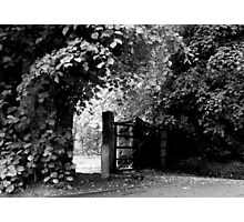 Countryside Walkway Photographic Print