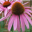 Pink Flower - Mars Hill, N.C. by Glenn Cecero
