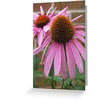 Pink Flower - Mars Hill, N.C. Greeting Card