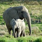 elephant mother and child by shaft77