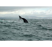 waving whale Photographic Print