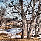 Off in the Distance by Barb Miller