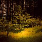 EVERY STEP LEADS DEEPER INTO THE WOODS  by leonie7