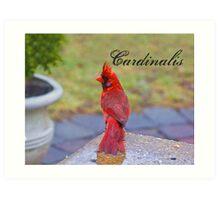 Cardinalis Art Print