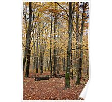 Autumnal Shades Poster
