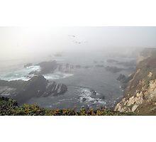 Coastal Birds Photographic Print