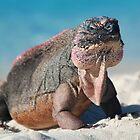 Iguana by Leon Heyns