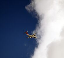 Swiss international  by larry flewers