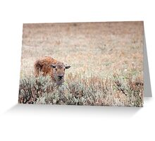 Sad Calf In The Freezing Rain Greeting Card