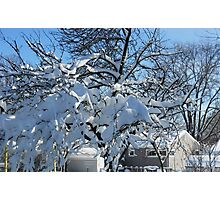 Snow Beautiful! Photographic Print