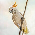 Sulphur Crested Cockatoo by Tarrby