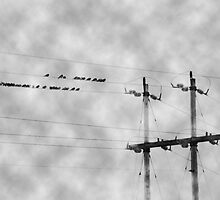 Wires by KathrynSylor