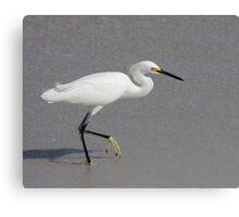 Snowy Egret. Canvas Print