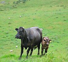 Cow with Calf on Thorpe Hillside by Rod Johnson