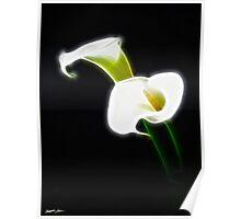 Elegant Calla Lily Flowers 1 Modern Poster