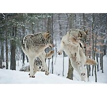 Dances With Wolves Photographic Print
