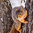 Wary Squirrel by Kathy Weaver