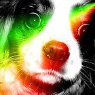 rainbow daisy by zoena