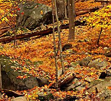 Autumn at Bear Mountain New York by Funmilayo Nyree