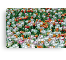 Field of Blooming Tulips in White, Red, Pink, and Green Canvas Print