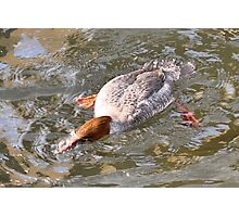 Platty-foot duckpuss Photographic Print