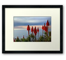 Red Pokers Over The Pacific (Laguna Beach, California) Framed Print