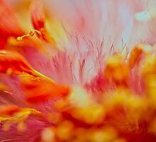 Forest Fire by Su Walker